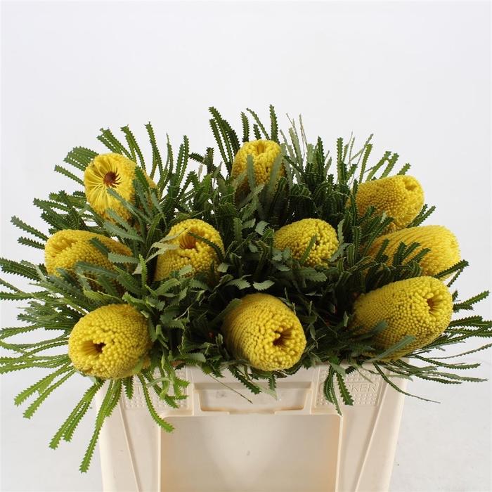 <h4>Banksia Hookeriana Yellow</h4>