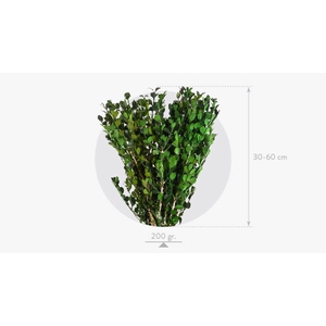 Buxus Green BXS/6103