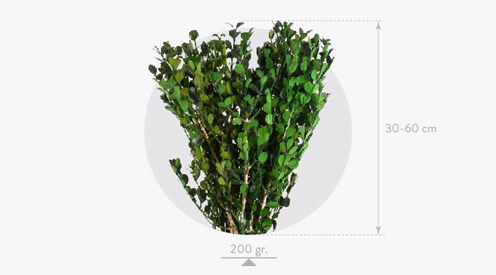 <h4>Buxus Green BXS/6103</h4>