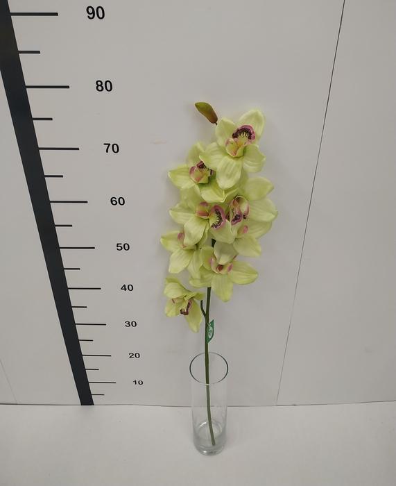 <h4>Haste cymbidium verde</h4>