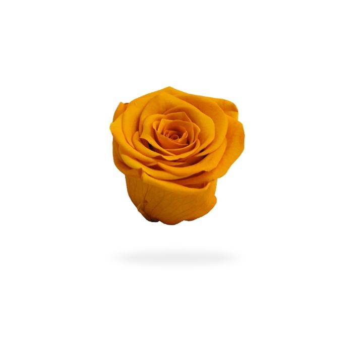 <h4>Rosa preservada cabeza naranja</h4>