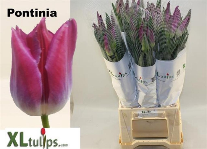 895C 100pcs//Bag Campanula Flower Seeds Convallaria Seeds Garden Supplies