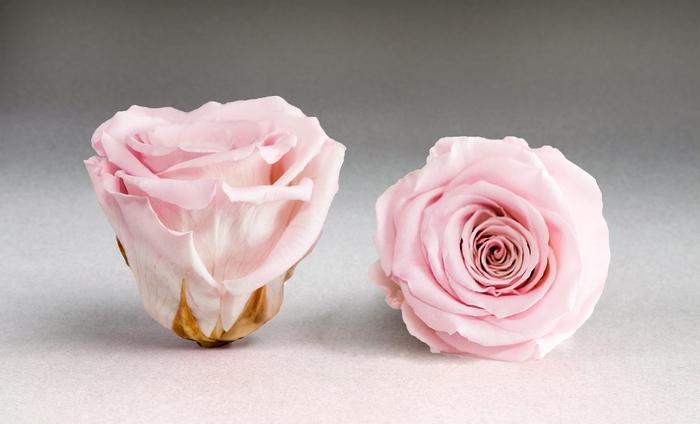 <h4>Rose stab. XXL Pin-04</h4>