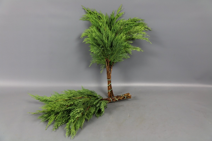 <h4>Coniferen Groen BQ</h4>