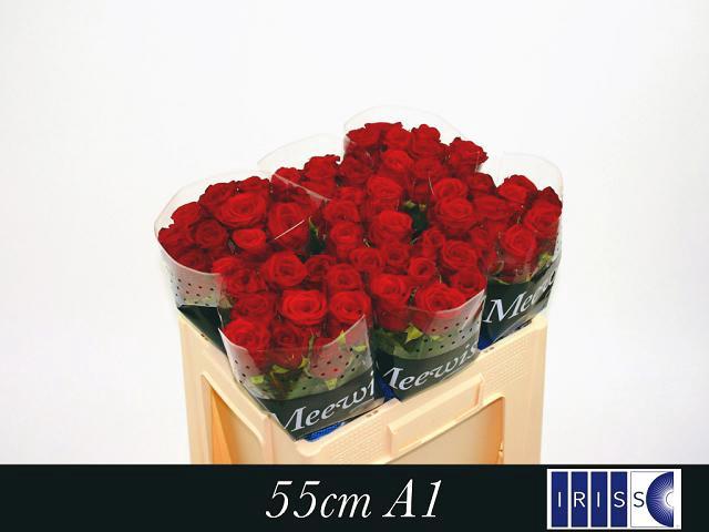 <h4>R GR RED NAOMI! A2</h4>