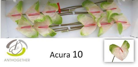 <h4>Anth Acura</h4>