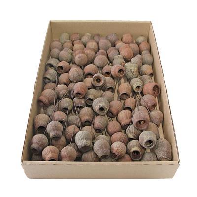 <h4>Eucalyp bells naturel op draad doosje 100 st.</h4>