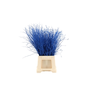 Berk ( Birch ) Blue