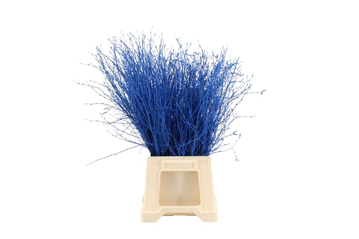 <h4>Berk ( Birch ) Blue</h4>