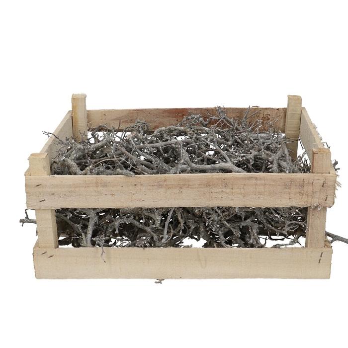 <h4>Dried articles Bonsai branches 60*40cm</h4>
