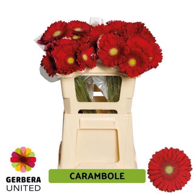 <h4>GE GR CARAMBOLE</h4>