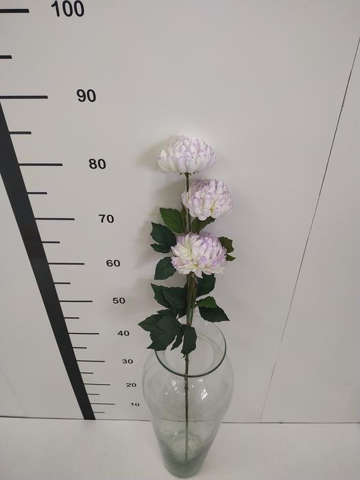 <h4>Haste chrysanthemum crema</h4>