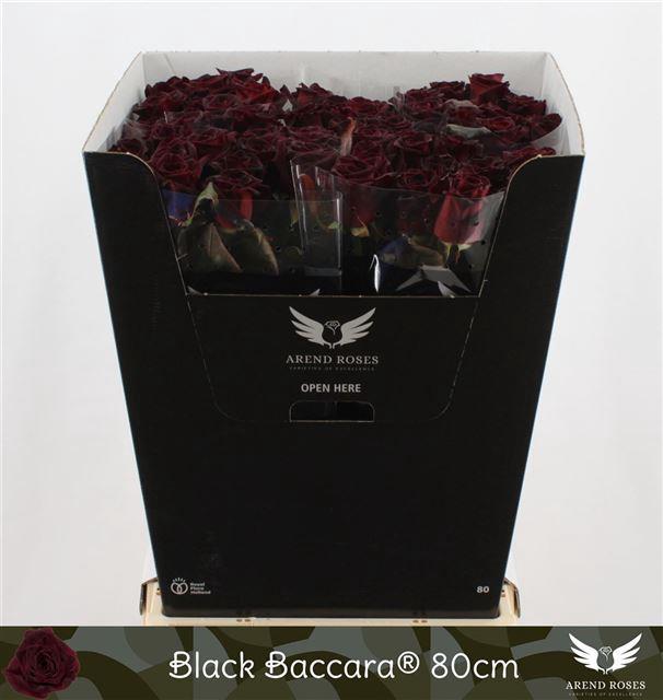 <h4>R GR BLACK BACCARA</h4>