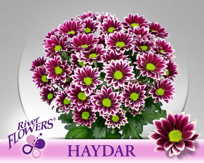 <h4>CHR T HAYDAR</h4>