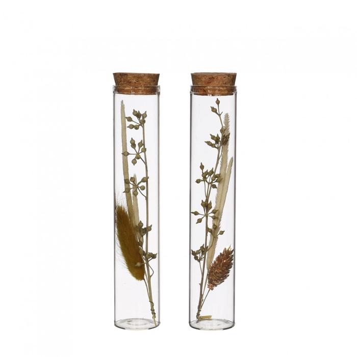 <h4>Dried flowers Glass+dried flower d3*15cm ass.</h4>