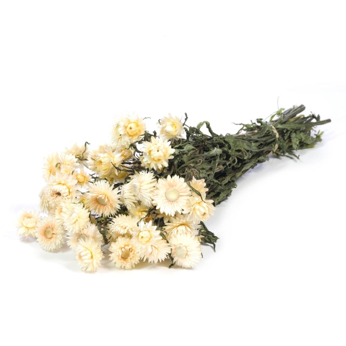 <h4>DRIED FLOWERS - HELICHRYSUM NATURAL WHITE</h4>