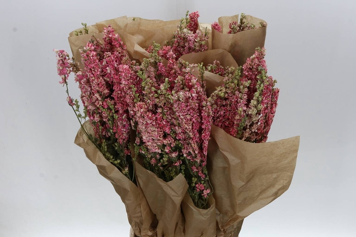 <h4>Delphinium Pink (P. Bos) Droog</h4>