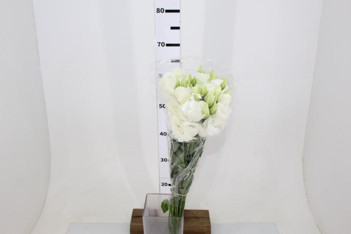 <h4>LISIANTHUS ROBELLA II PURE WHITE BRANCA 070 CM</h4>