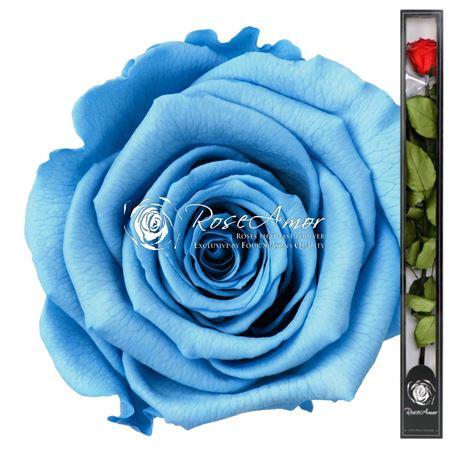 <h4>70cm Stem Blu01</h4>