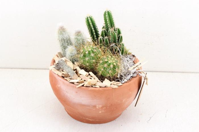 arr. MB Cactus - Bolpot terra 285/5