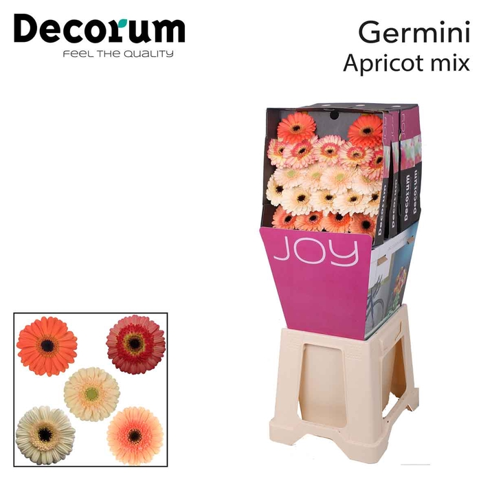 <h4>Ge Mi diamond mix Apricot</h4>