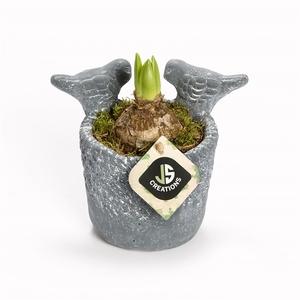 Arr.  Hyacinthus L%