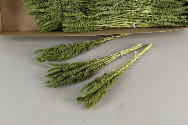 <h4>Df Amaranthus Green 15gr Bs</h4>