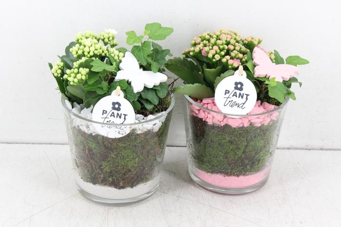<h4>arr. PL - Glas pot zwaar - roze/wit</h4>