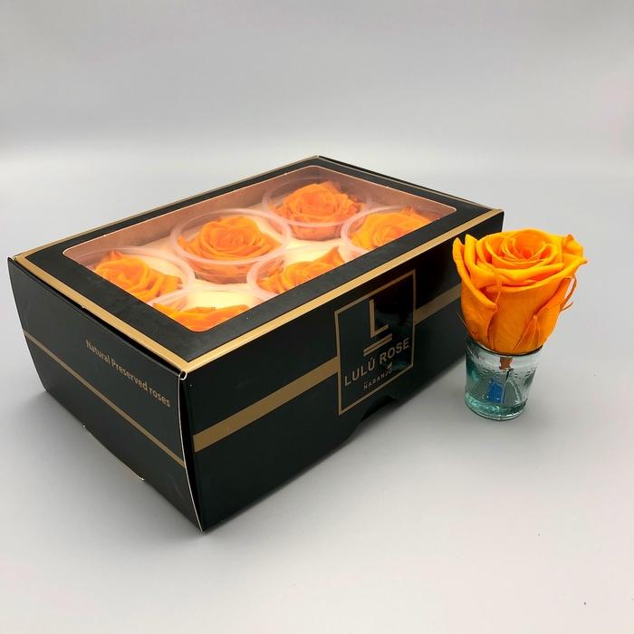 <h4>R PR Lulu (XL) Orange</h4>