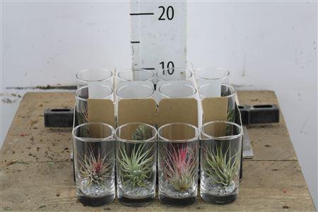 <h4>Arr Till In Longdrink Glass</h4>