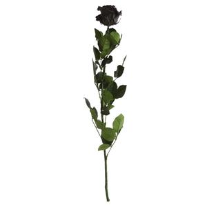 Roos op steel Standard 55cm Zwart