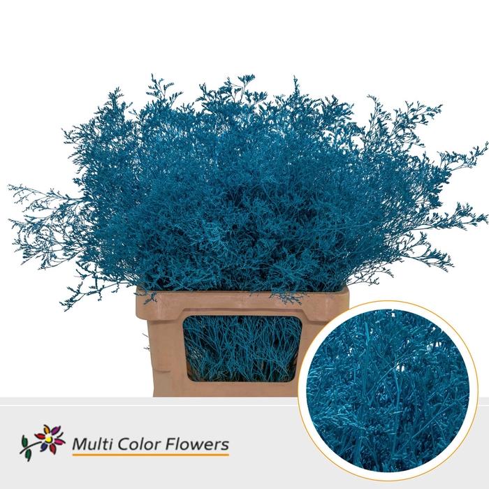 <h4>Limonium Beltaard Turquoise</h4>