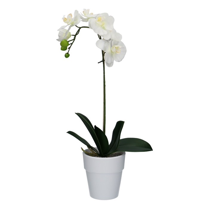 <h4>Silk Pot Phalaenopsis 55cm (inc.pot)</h4>
