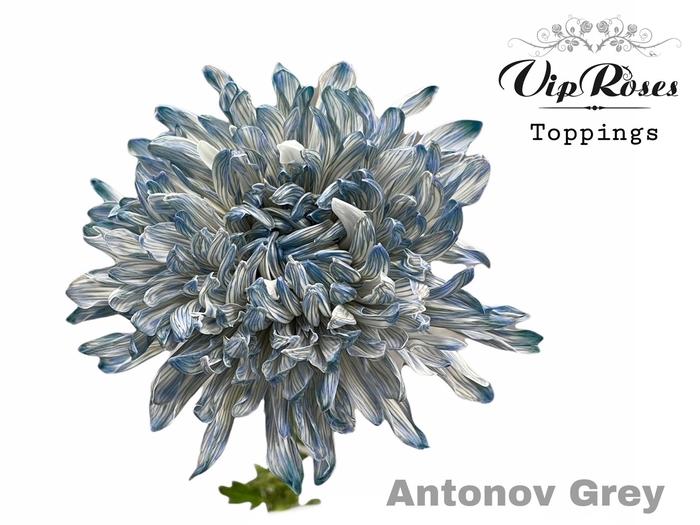 <h4>CHR G ANTONOV GREY</h4>