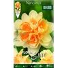 Z Narcissus Double Peach Cobbler