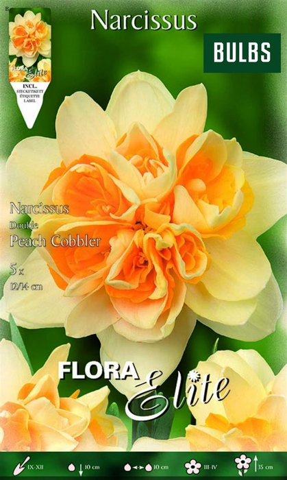 <h4>Z Narcissus Double Peach Cobbler</h4>