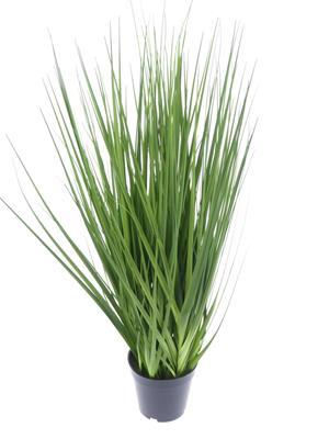 <h4>Af Potted Flat Leaf Grass Plan</h4>