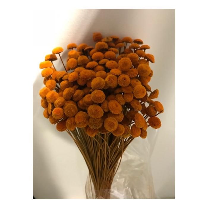 <h4>Botao oranje 45cmh 100gr</h4>