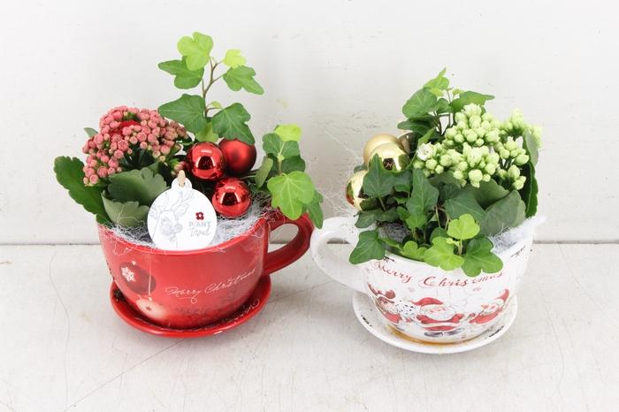 <h4>arr. PL - Kop en schotel kerst - rood/wit</h4>