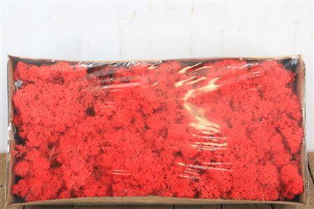 <h4>Reindeer Moss 500gr Red</h4>