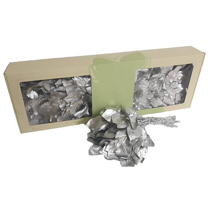 <h4>Salal tips per bunch Silver</h4>