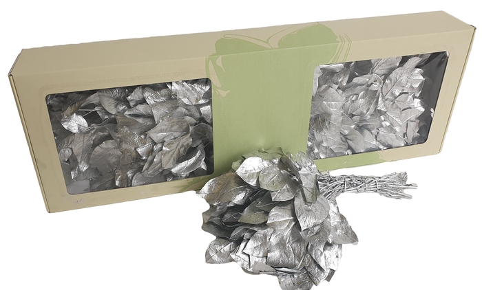 <h4>Salal tips preserved per bunch Silver</h4>
