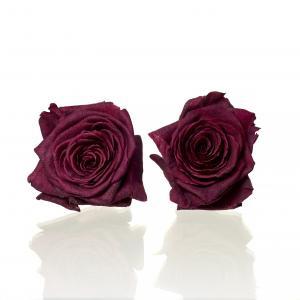 Rose Red Naomi d.red 5,5-6cm