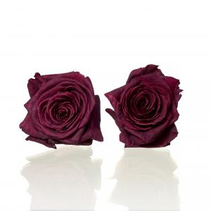 <h4>Rose Red Naomi d.red 3,5-4cm</h4>