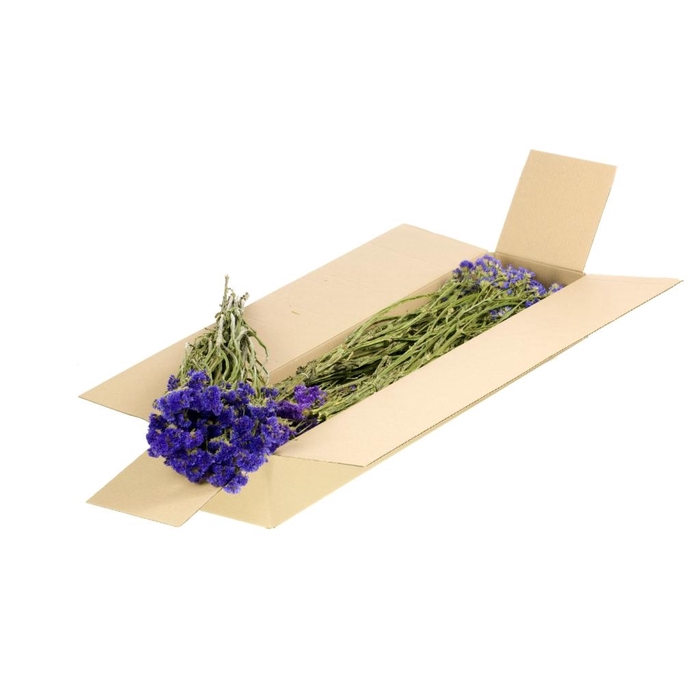 <h4>DRIED FLOWERS - STATICE SIN. NAT BLUE</h4>