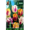 Z Tulipa Rembrandt (striped) Mixed