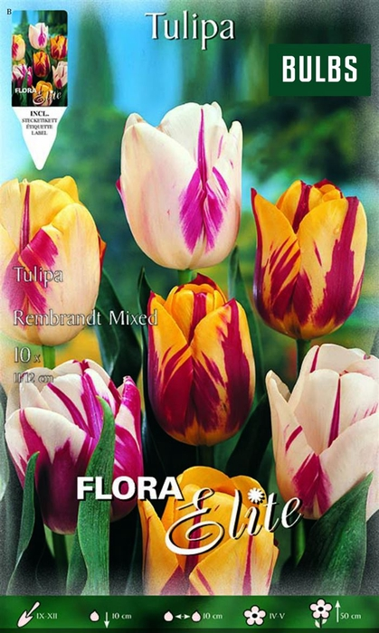 <h4>Z Tulipa Rembrandt (striped) Mixed</h4>