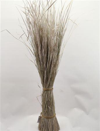 <h4>DRIED SHEAF GREEN GRASS L160.0 white wash</h4>
