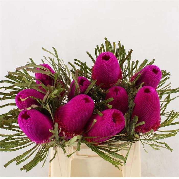 <h4>Banksia Hookeriana Pink</h4>