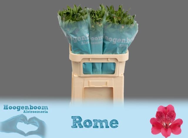 <h4>ALSTR ROME</h4>